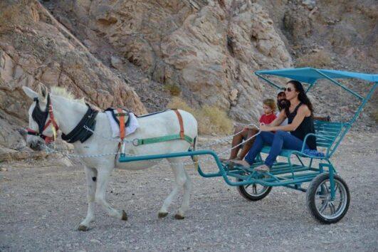 משפחה בטיול כרכרות בחוות הגמלים באילת