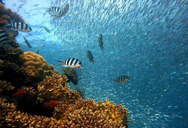 מתחת לים